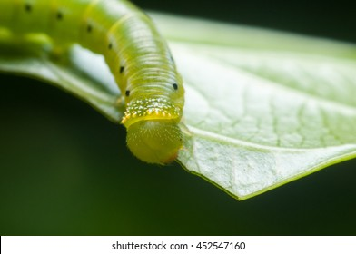 worm on green leaf