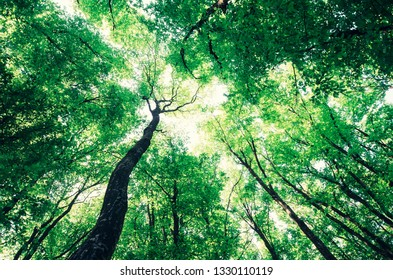 worm's eye view of forest trees, green canopy in summer sunlight green nature background