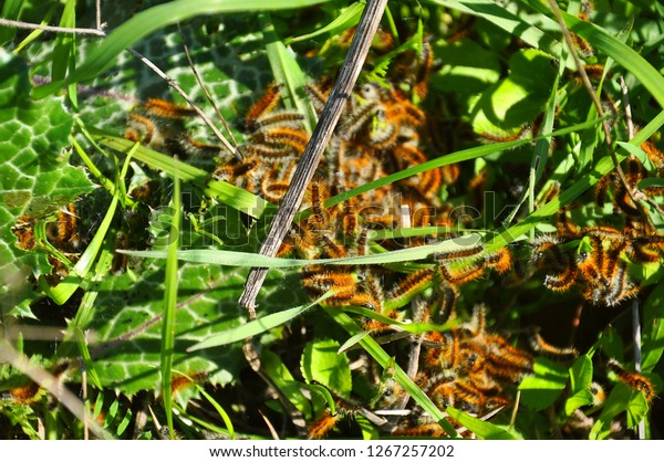 Worms On Grass Stock Photo Edit Now 1267257202