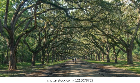 Wormsloe Oak Plantation, Savannah, Georgia, USA - July 10, 2018: Two people walking under ancient oaks covered in Spanish moss at the historic Wormsloe Plantation in Savannah