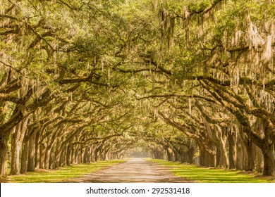 Wormsloe plantation in Savannah GA. This is a focused stacked composite of ten photos for optimal sharpness in foreground, middle ground, and background.