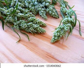 Wormwood, absinthium (Artemisia absinthium, absinthe, absinthium, sagebrush, mugwort). Medicinal plant. Bunch of wormwood herb  leaves