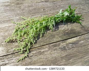 Wormwood. Flowering absinthium (Artemisia absinthium, absinthe, absinthium, sagebrush, mugwort). Medicinal plant. Bunch of wormwood herb flowers and leaves on an old wooden table.