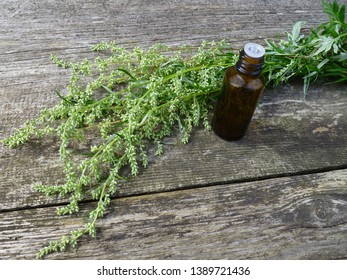 Wormwood. Flowering absinthium (Artemisia absinthium, absinthe, absinthium, sagebrush, mugwort). Medicinal plant. Bunch of wormwood herb flowers and leaves, jar of oil on an old wooden table.