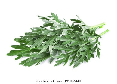 wormwood grass on white