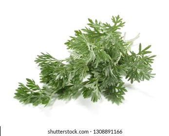Wormwood Leaves - Artemisia Absinthium