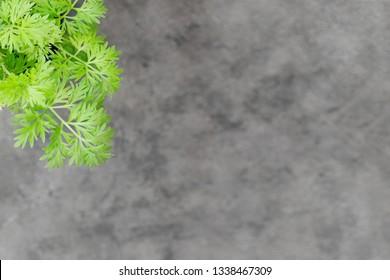 Wormwood sagebrush leaves background. Artemisia absinthium ( absinthe, absinthium, absinthe wormwood, wormwood ) plant, close up on grey background