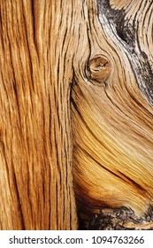 worn bristlecone pine wood detail from an old tree trunk