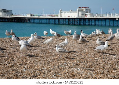 WORTHING, UK - JULY 13, 2019: Sea gulls are sitting on the pebbel beach in front of art deco pier in Worthing