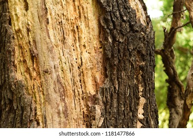 Wounded tree in the forest