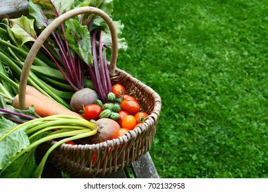 Woven basket filled with freshly harvested vegetables from an allotment sits on a wooden garden bench; copy space on grass