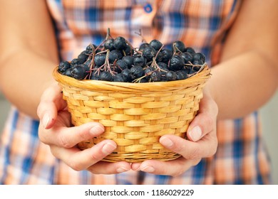 Woven basket full of Aronia berries (black chokeberry)