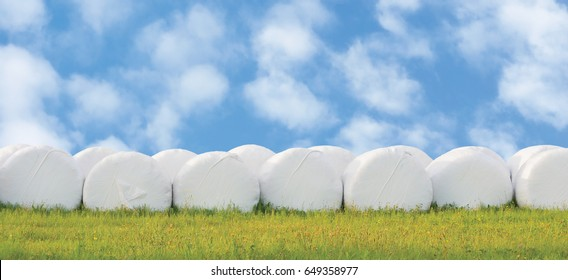 Wrapped stacked silage bales row round white plastic film hay rolls haylage stack rows panorama, horizontal closeup summer meadow grass sunny sky cloudscape clouds baling concept panoramic rural scene
