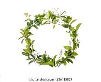 wreath of creeper flower isolated on white background, alphabet floral