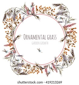 Wreath with ornamental dry grass. Watercolor botanical illustration. Frame for greeting card or invitation