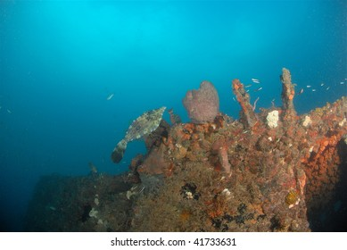 wreck dive and fish