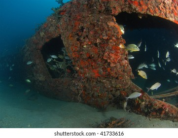 wreck dive and reef fish