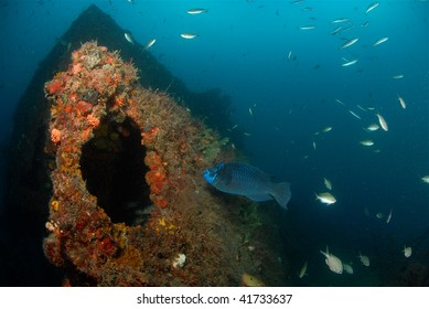 wreck diving with parrotfish