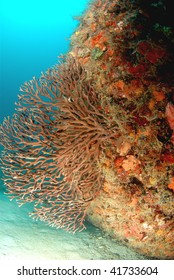 wreck diving and reef