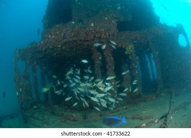 wreck diving with reef fish