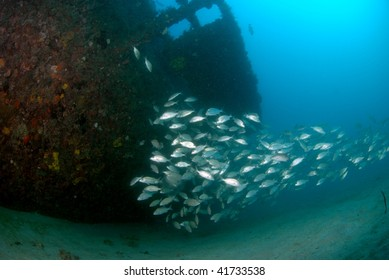 wreck and fish