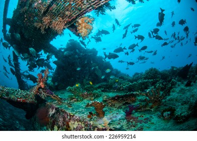 Wreck and fishes swim in Gili, Lombok, Nusa Tenggara Barat, Indonesia underwater photo. There are chubs fishes, damselfish indo-pacific sergeant Abudefduf vaigiensis