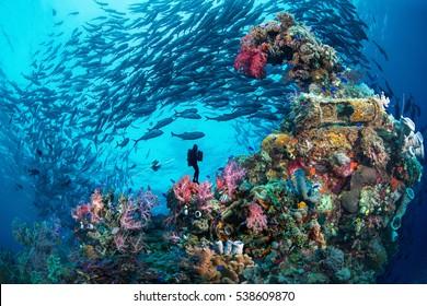 Wreck & Jack, Chuuk, Micronesia