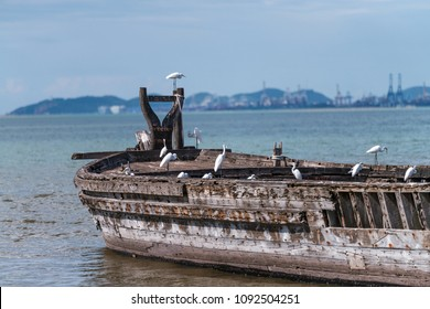 Wreck of a wooden boat and rows of white herons and the electrical plant in the background
