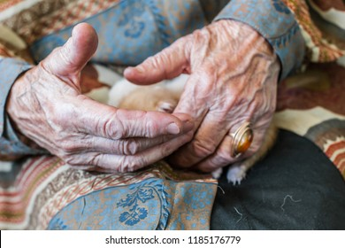 The wrinkled fingers of the elderly person and the baby's hand touch the newborn little kittens