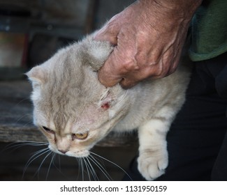 The wrinkled hand of a man holds the scruff of a sick cat