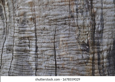 wrinkled wood texture of a dry and dead bead tree trunk