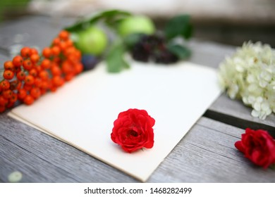 Writing paper from eternal summer and abundance, with beautiful rose flowers, green leaves, ripe mountain ash and apples. Blurred focus on the table and natural background with textures