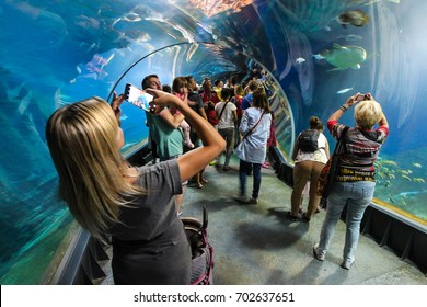 Wroclaw, Poland - August 24, 2017. Underwater tunnel in Wroclaw ZOO's Africarium.