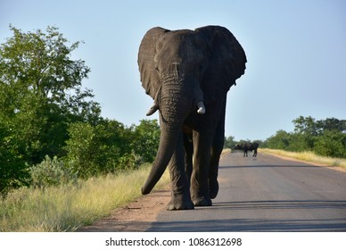 wrong side traffic,left-side driving in Kruger National park in South Africa