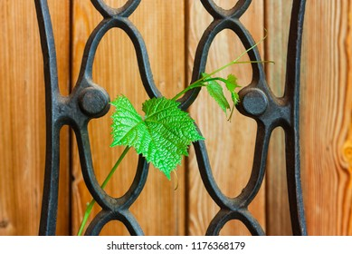 wrought-iron fence with a vine