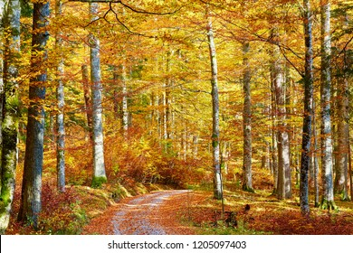Wunderfull colors of autumn in primeval forest in lower austria