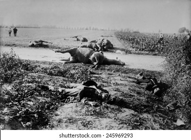 WWI. Dead soldiers and horses in a field after the Battle of Haelen which was fought by the German and Belgian armies on August 12, 1914 in Belgium during WWI.