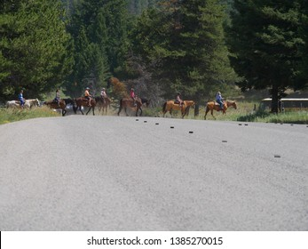 Wyoming, USA--July 2018: Horseback riders cross the road at Yellowstone National Park. Horseback riding is one of the popular activities at Yellowstone National Park.