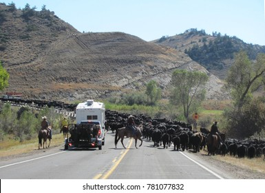 A Wyoming-style traffic jam blocks the Chief Joseph Scenic Byway within the boundaries of Yellowstone National Park in far northwestern Wyoming.