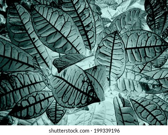 x ray Black and white abstract of coleus leaves