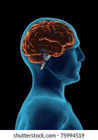 X Ray Brain