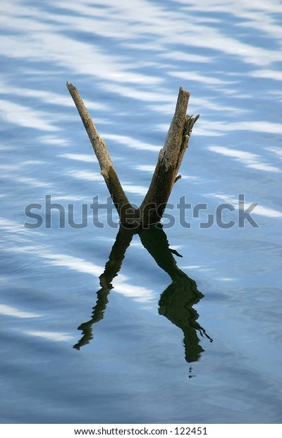 X shaped branch under and over water