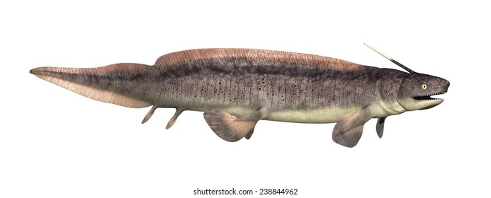 The Xenacanthus was a prehistoric shark that lived during the Devonian and Triassic Periods - 3d render.