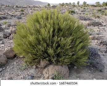 What are xerophytes?
