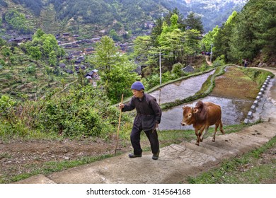 Xijiang miao village, Guizhou Province, China - april 17, 2010: Chinese peasant climbs up the mountain trail, holding the reins of a red cow. - Shutterstock ID 314564168