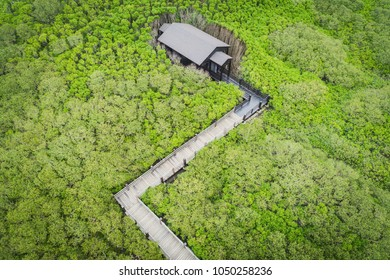 Xinfeng Mangrove Aerial View - Mangrove trail and gazebo, birds eye view use the drone, shot in Hsinchu, Taiwan.
