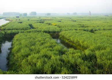 XINGHUA, CHINA - APRIL 26, 2015: Canal in rapeseed field at morning