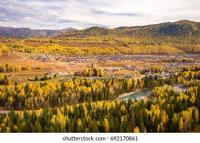 Xinjiang Hemu birch forest autumn scenery