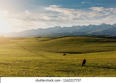 Xinjiang Karaqin grassland, alpine grassland, alpine pasture