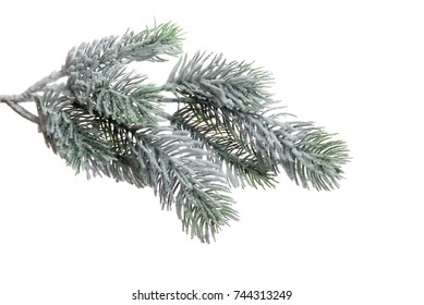 Xmas tree branch with snow, isolated on white background